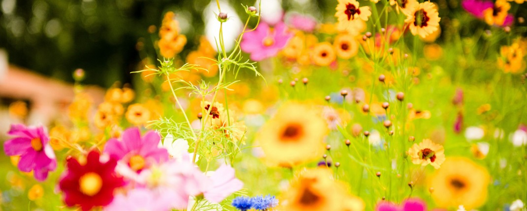 dye garden