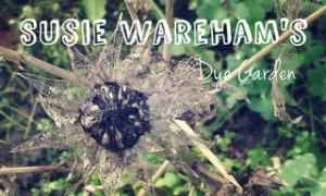rsz_gardenflowermain2